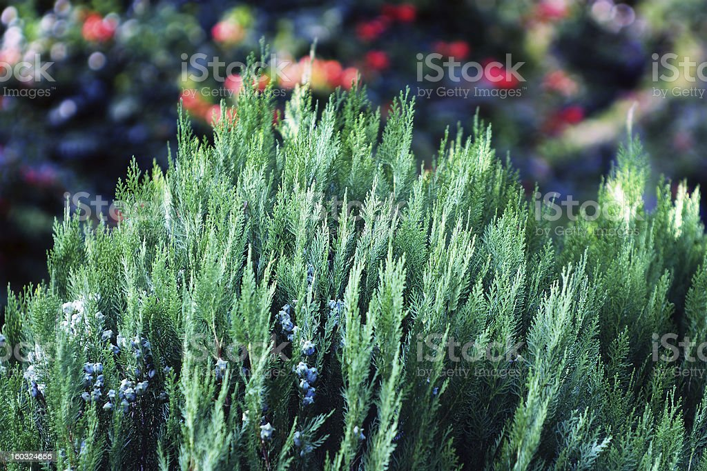 Plant background royalty-free stock photo