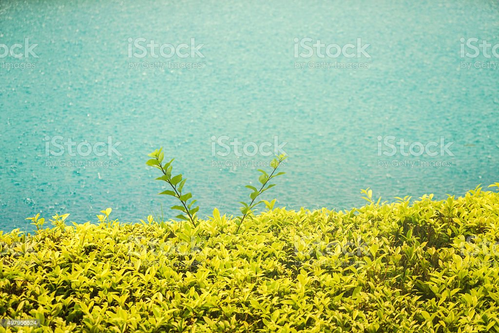 Plant Background stock photo
