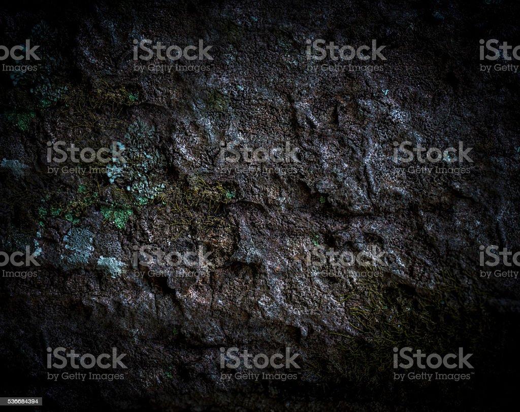 Plant bark textured background stock photo