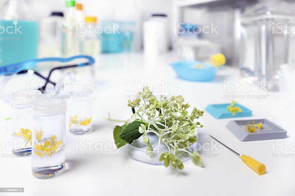 Plant biology stock photo