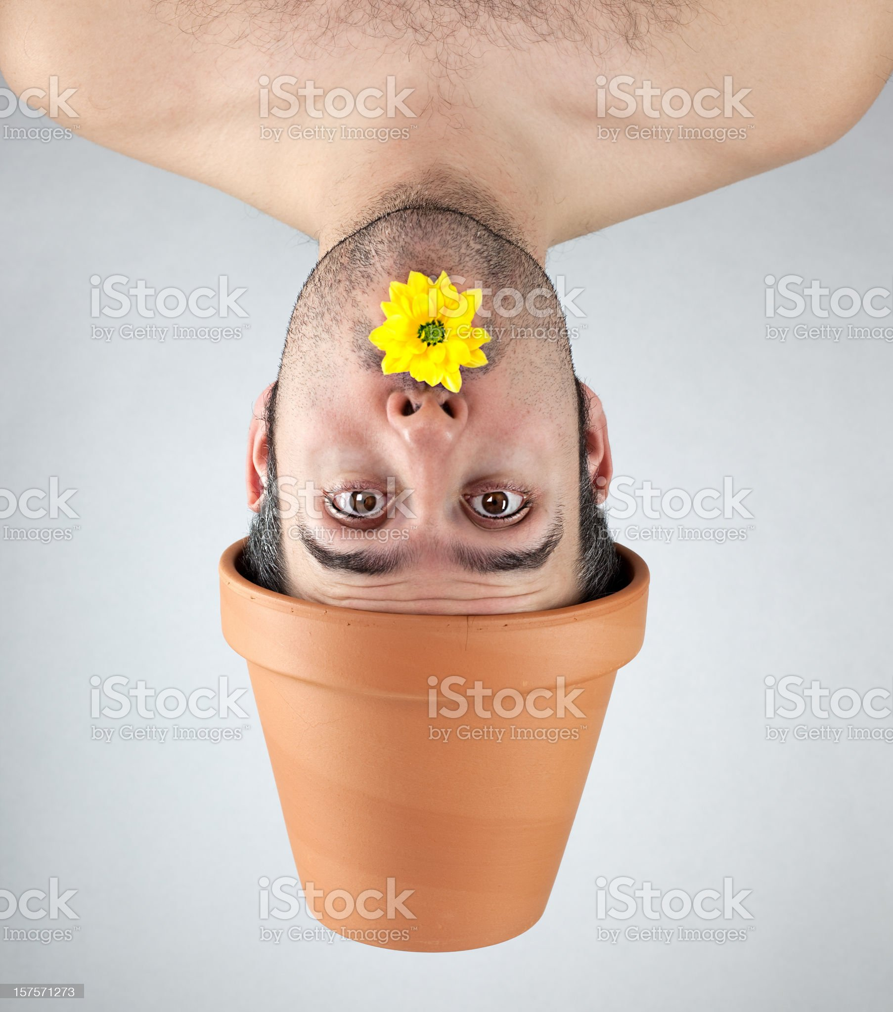 Plant boy with a yellow flower royalty-free stock photo