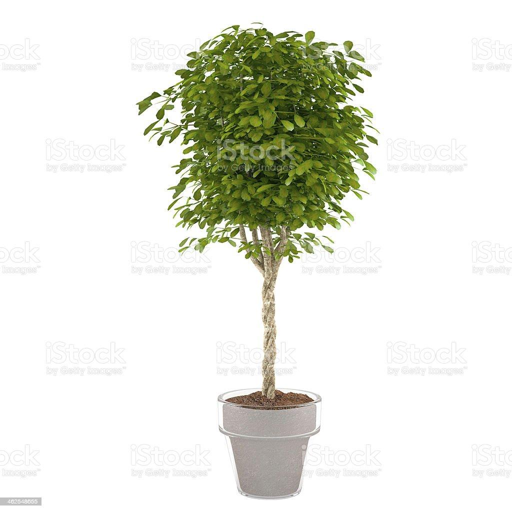plant bush in the pot stock photo