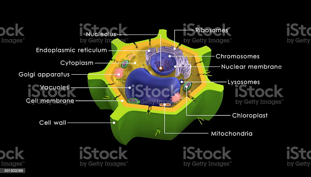 Plant cell stock photo