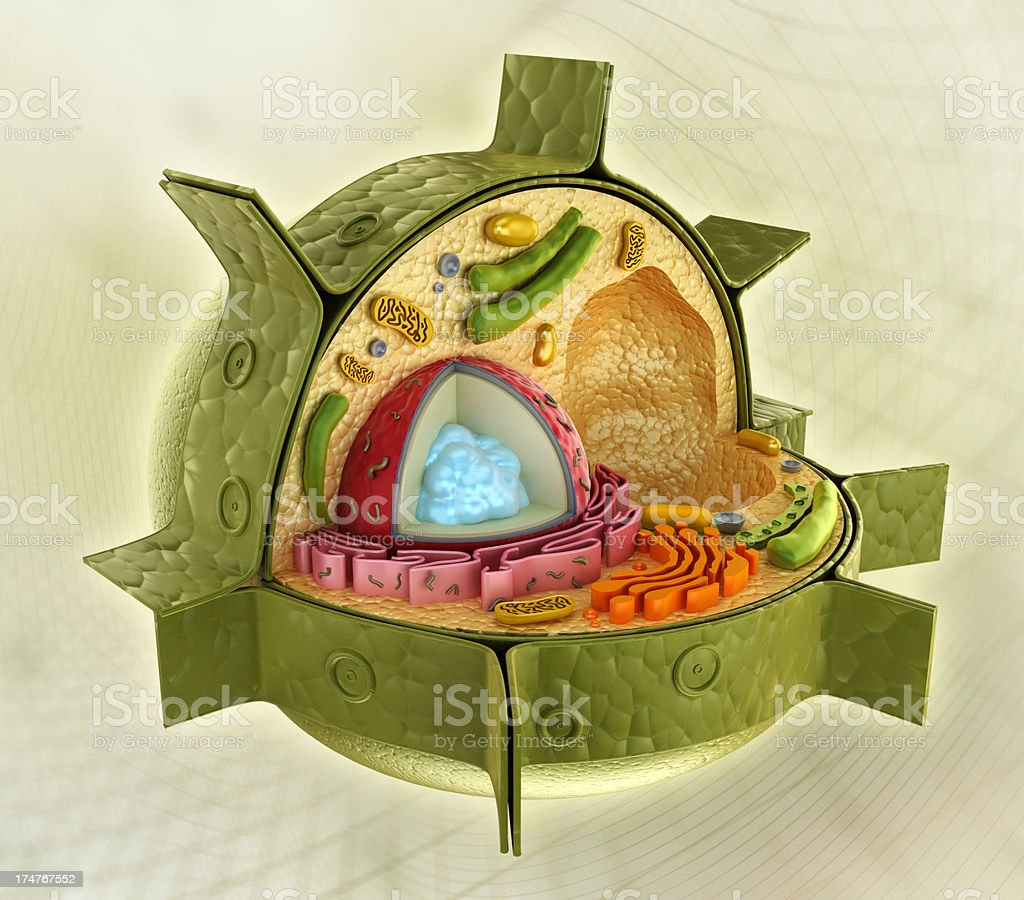 Plant cell structure stock photo