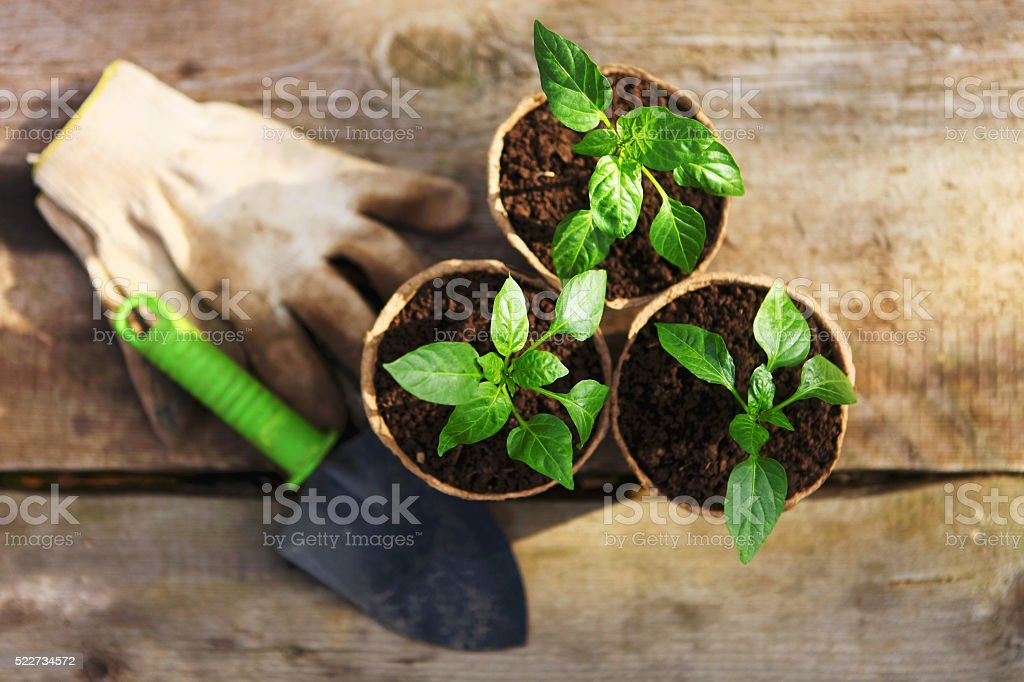Plant close up. stock photo