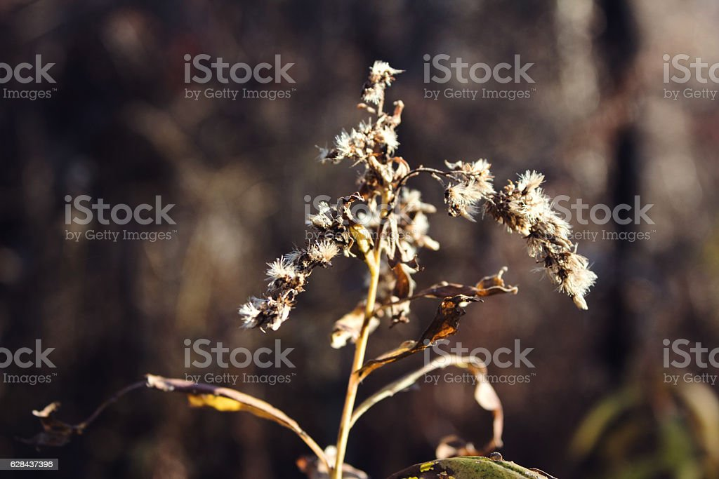 Plant Closeup stock photo