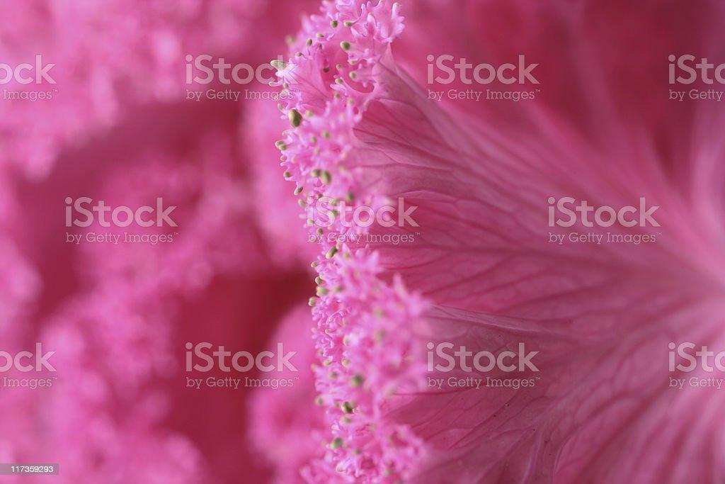 Plant Detail royalty-free stock photo