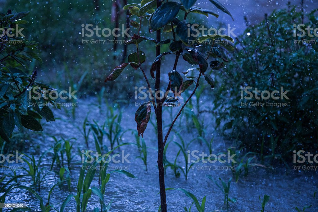Plant during rain stock photo