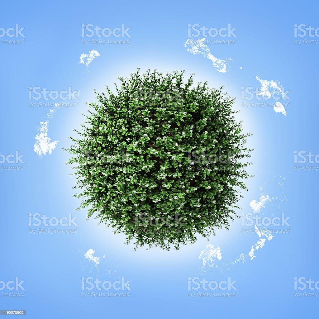 plant earth sphere stock photo