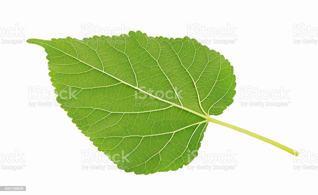 Plant green leaf, stock photo
