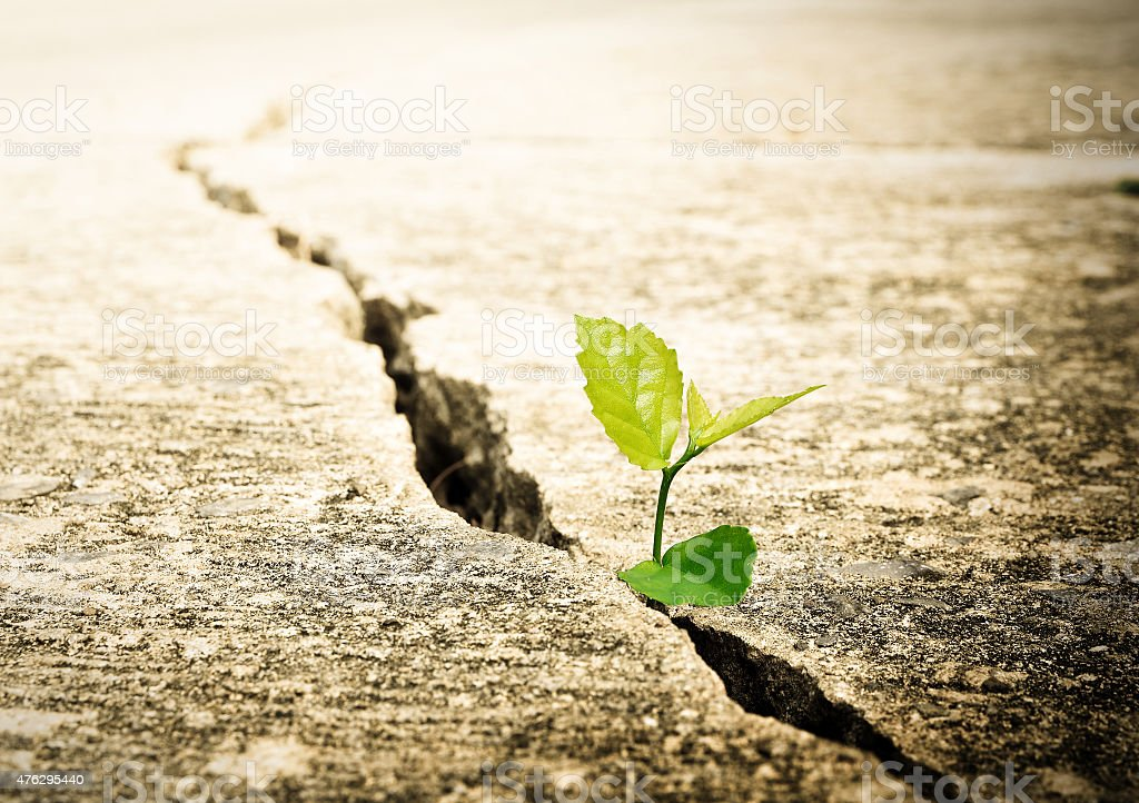 Plant grow on street , Ecology concept stock photo