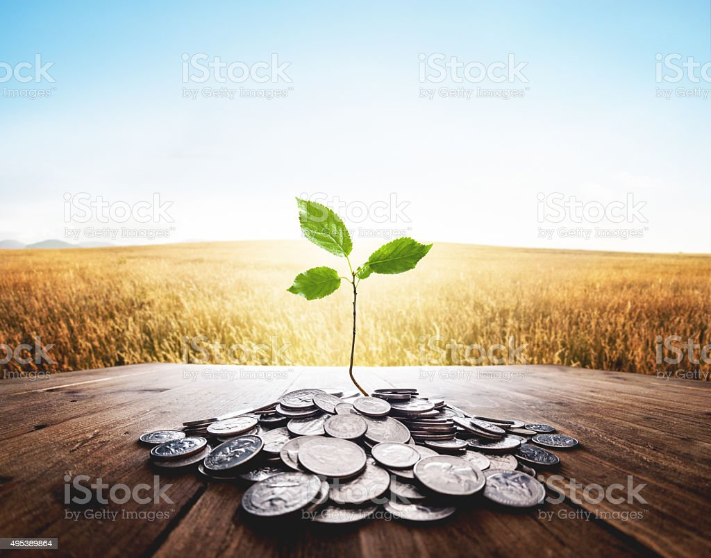 Plant growing from a bunch of dollar cent coins stock photo