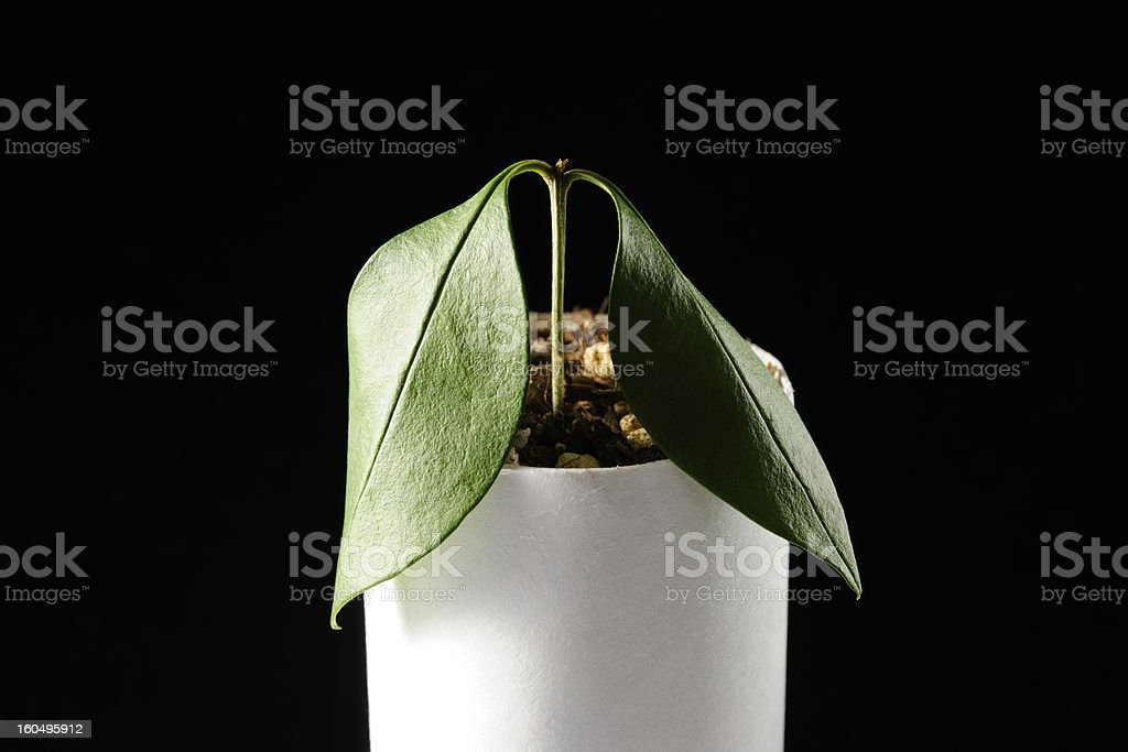Plant growing from a core of toilet paper royalty-free stock photo