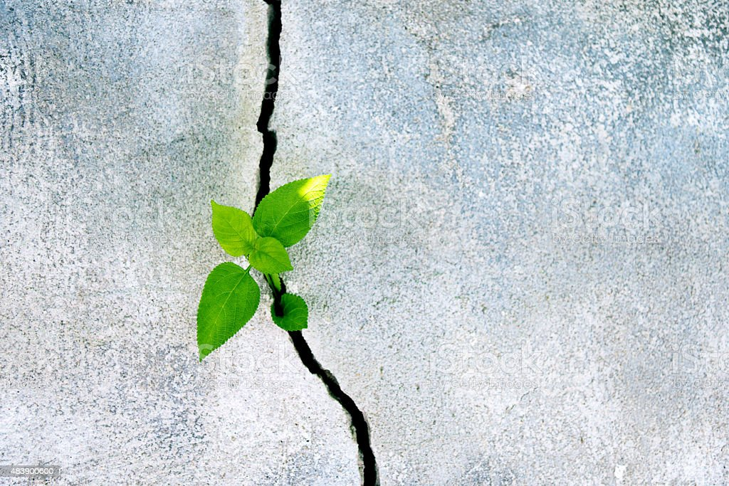 Plant growing in a concrete wall stock photo