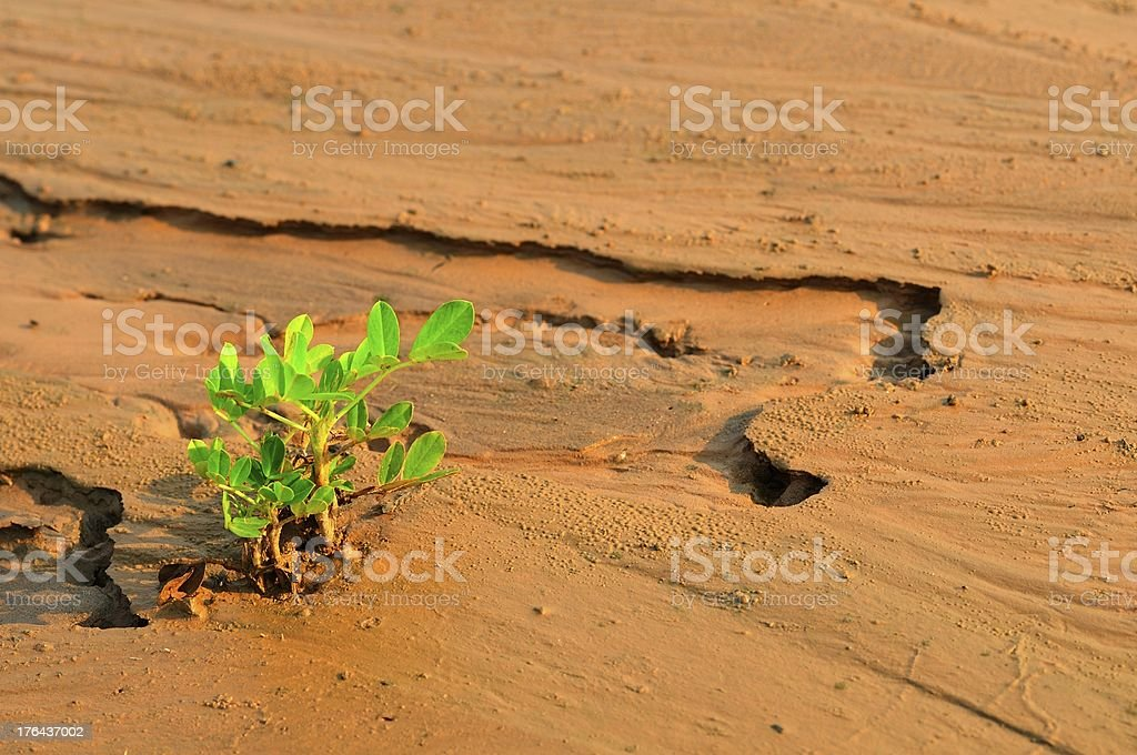 plant growing in a desert sand stock photo