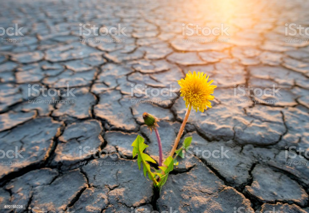 plant growing in desert stock photo