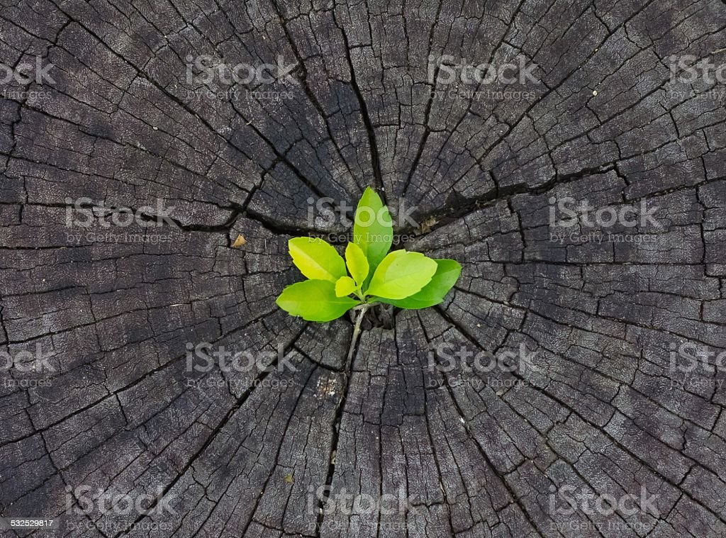 Plant Growing in Wood stock photo