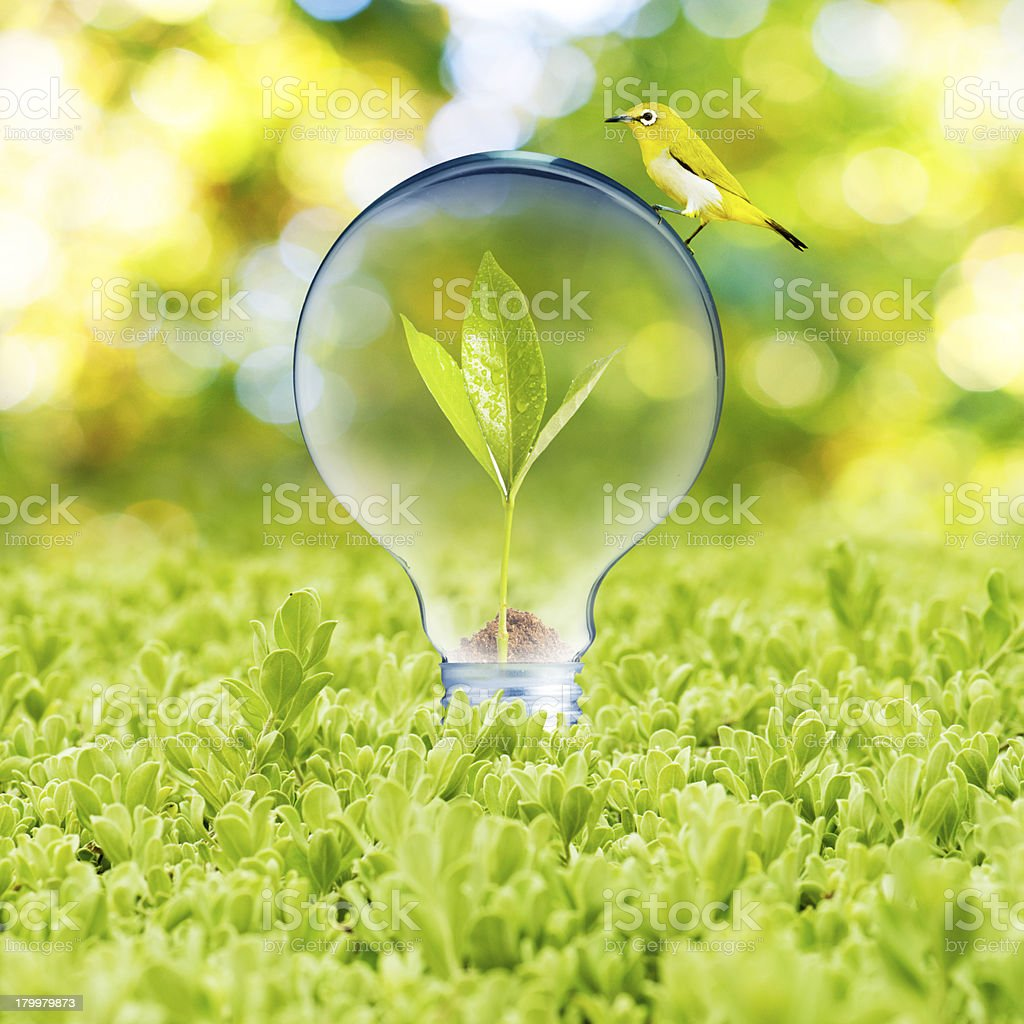 Plant growing inside light bulb with bird royalty-free stock photo
