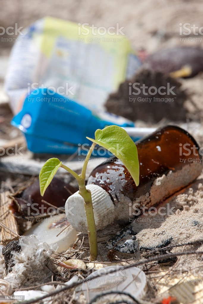 Plant growing on a beach surrounded by washed up garbage. royalty-free stock photo