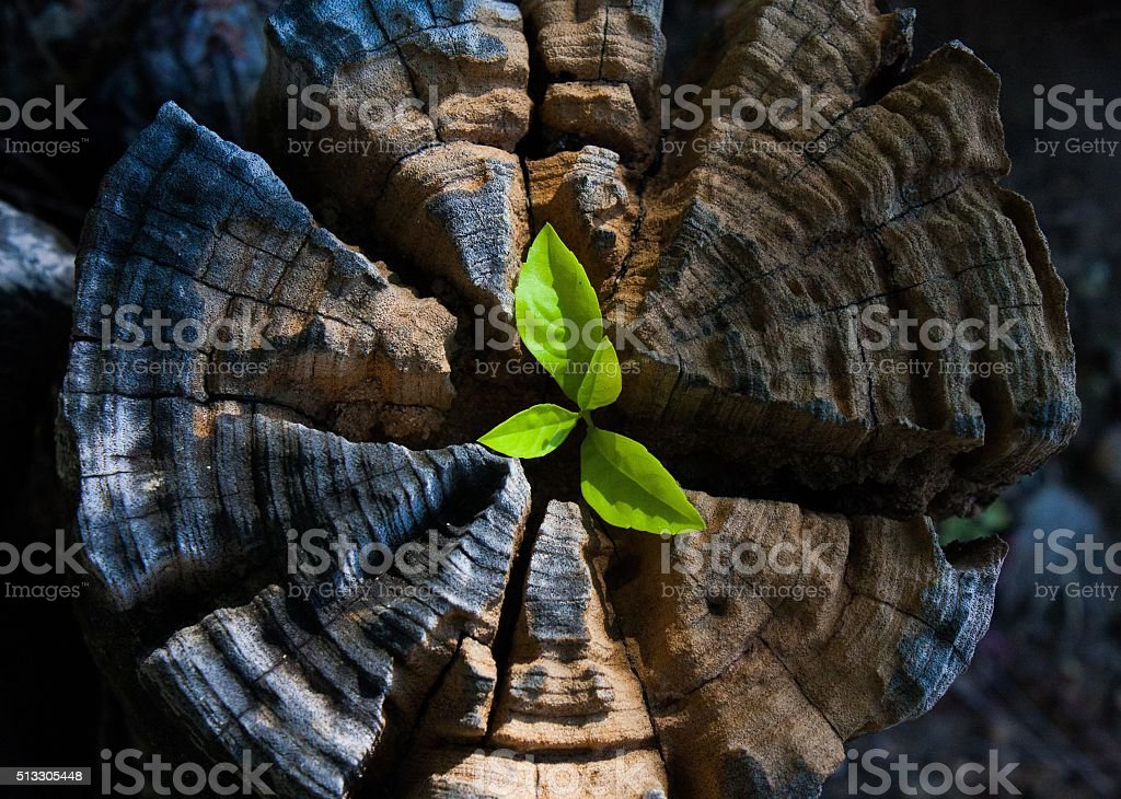 plant growing out of a tree stump stock photo
