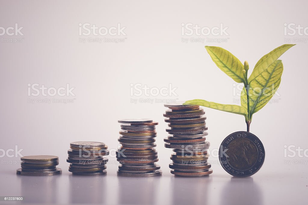 plant growing out of coins money stock photo
