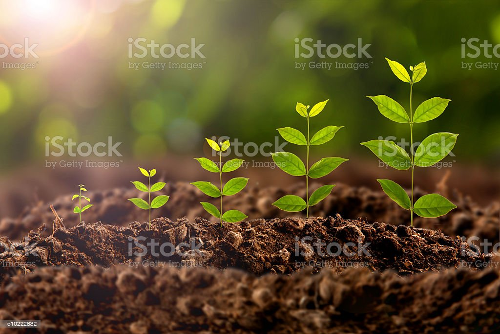 plant growing royalty-free stock photo