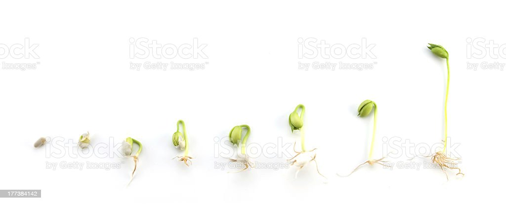 Plant Growing Sequence stock photo