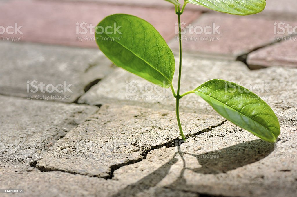 Plant growing through crack in pavement royalty-free stock photo