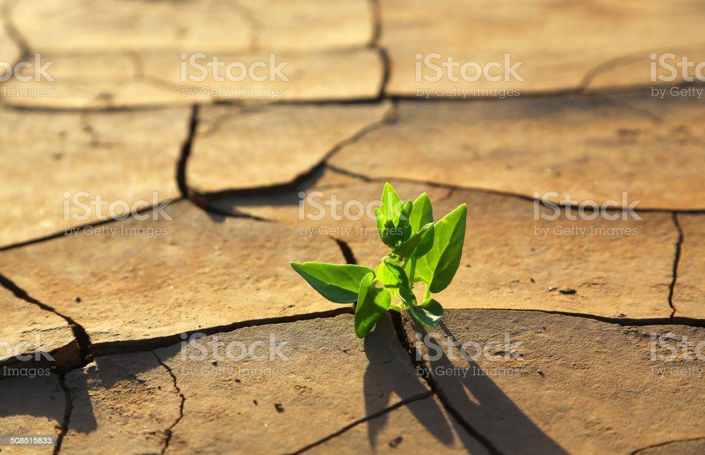 Plant growing through dry cracked soil stock photo