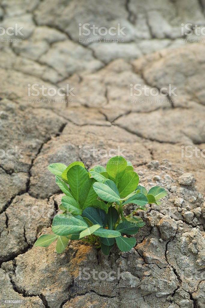 Plant growing through parched earth. stock photo