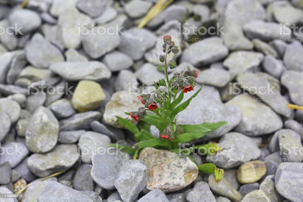 Plant Grows Amongst the Stone stock photo