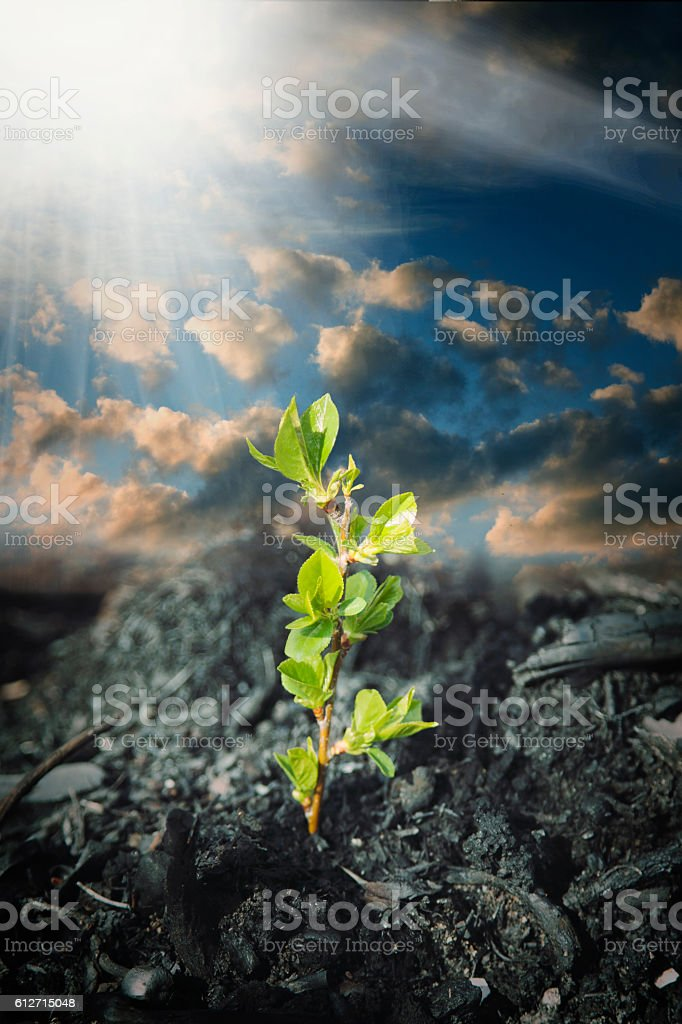 plant grows in  ash stock photo