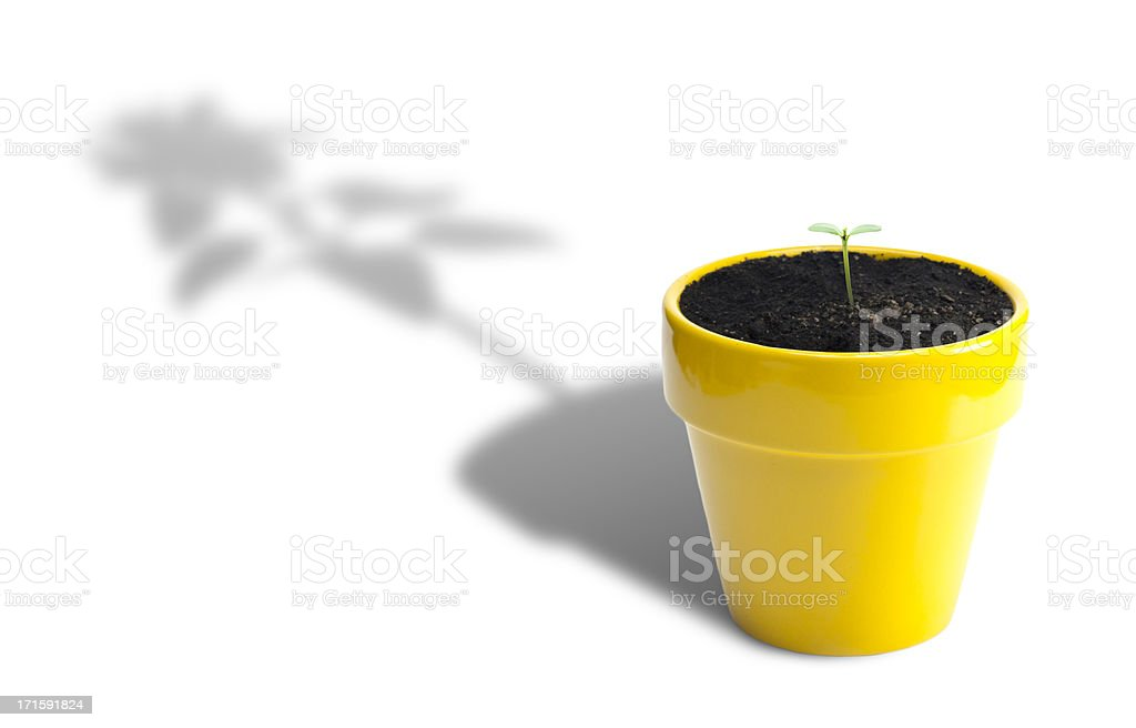 Plant Growth royalty-free stock photo