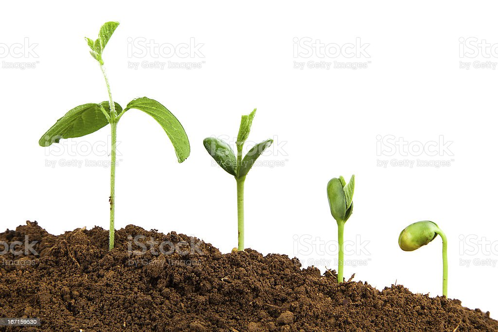 plant growth sequence:new life growing in spring royalty-free stock photo