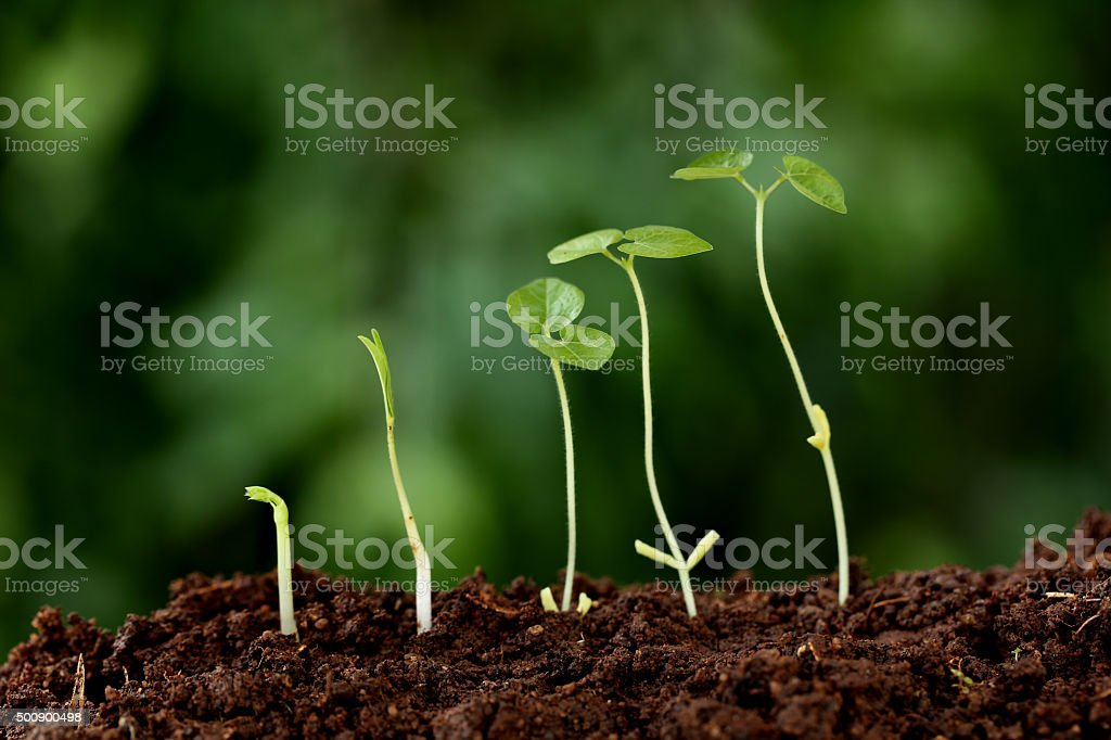 Plant growth-New beginnings stock photo