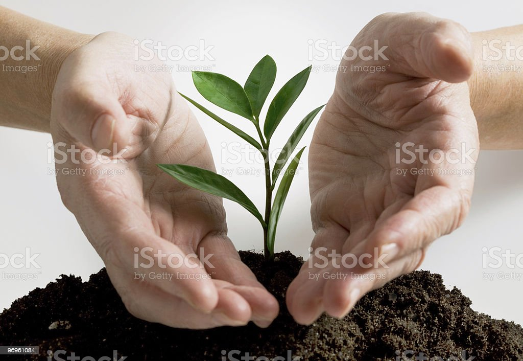 Plant in a hand royalty-free stock photo