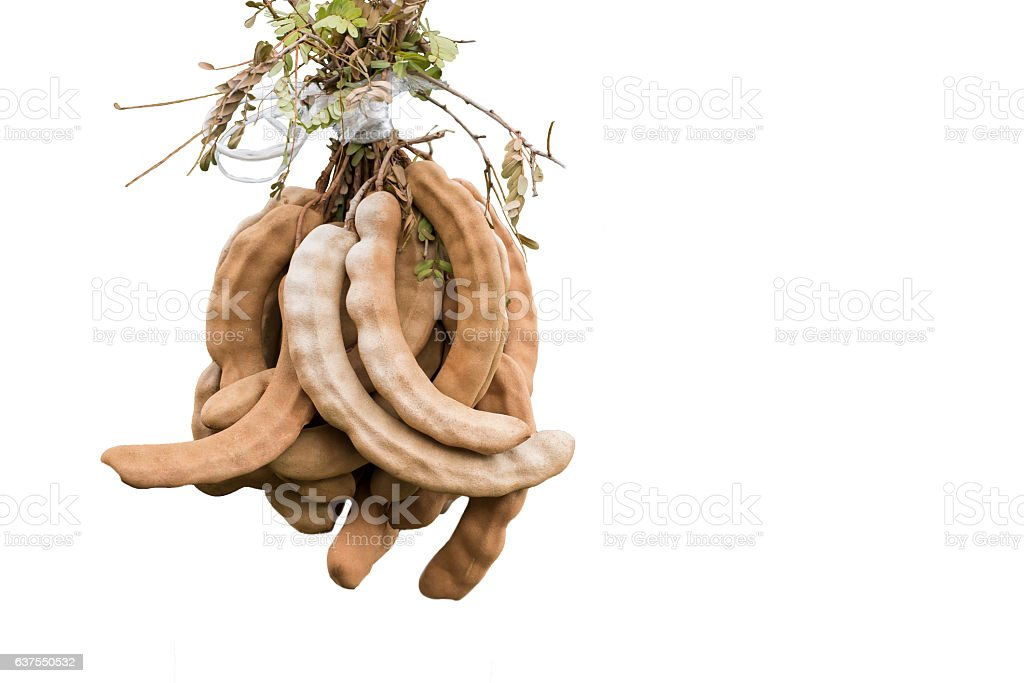 Plant in basket hanging on white background stock photo