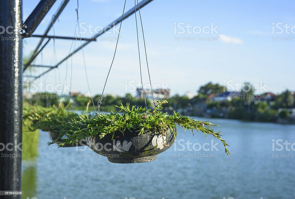plant in black baked clay royalty-free stock photo
