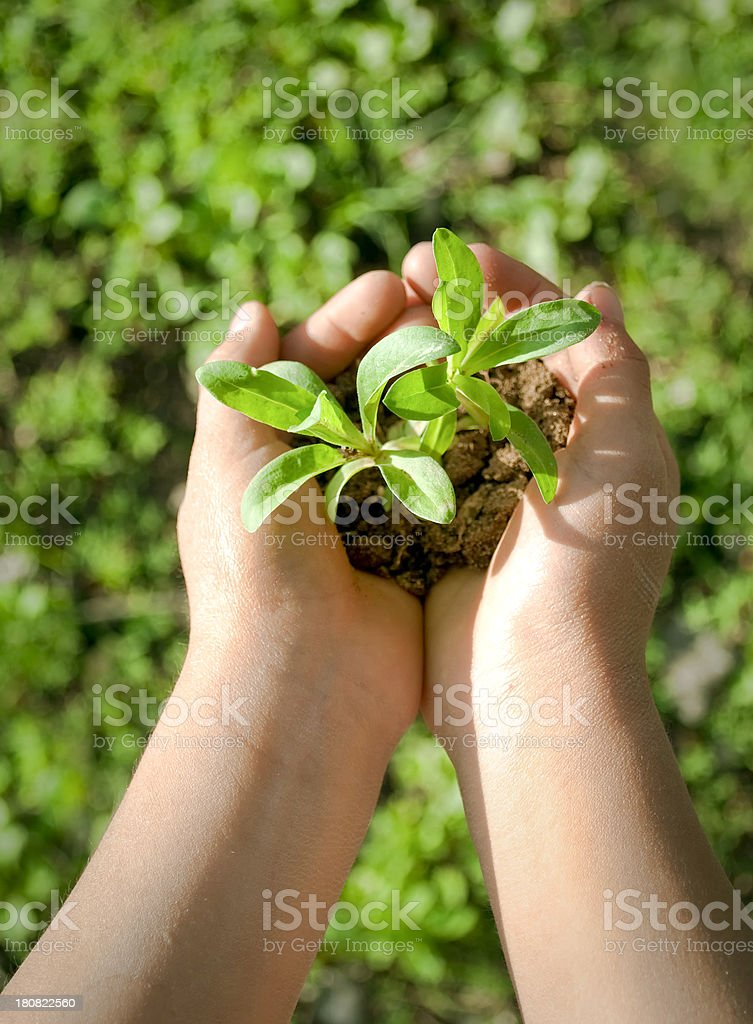 Plant in child's hands royalty-free stock photo