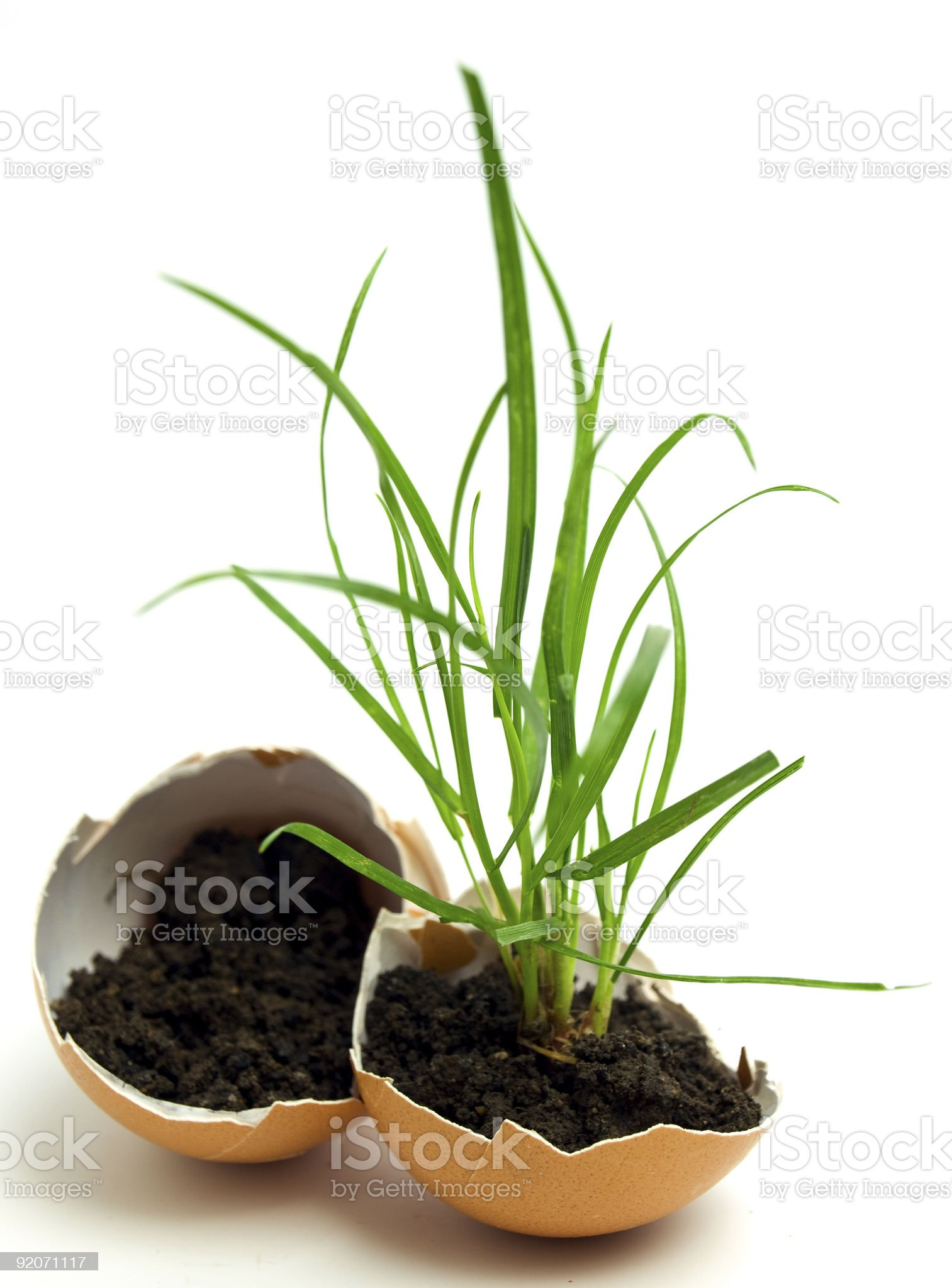 plant in egg royalty-free stock photo