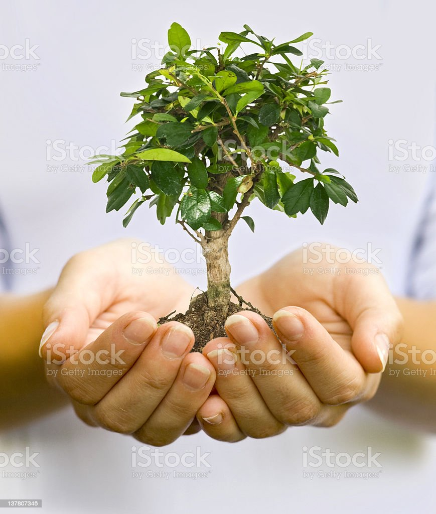 Plant in female hand royalty-free stock photo