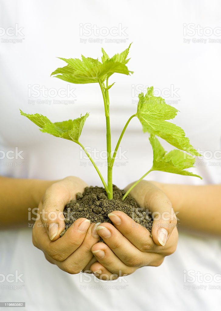 plant in female hands stock photo