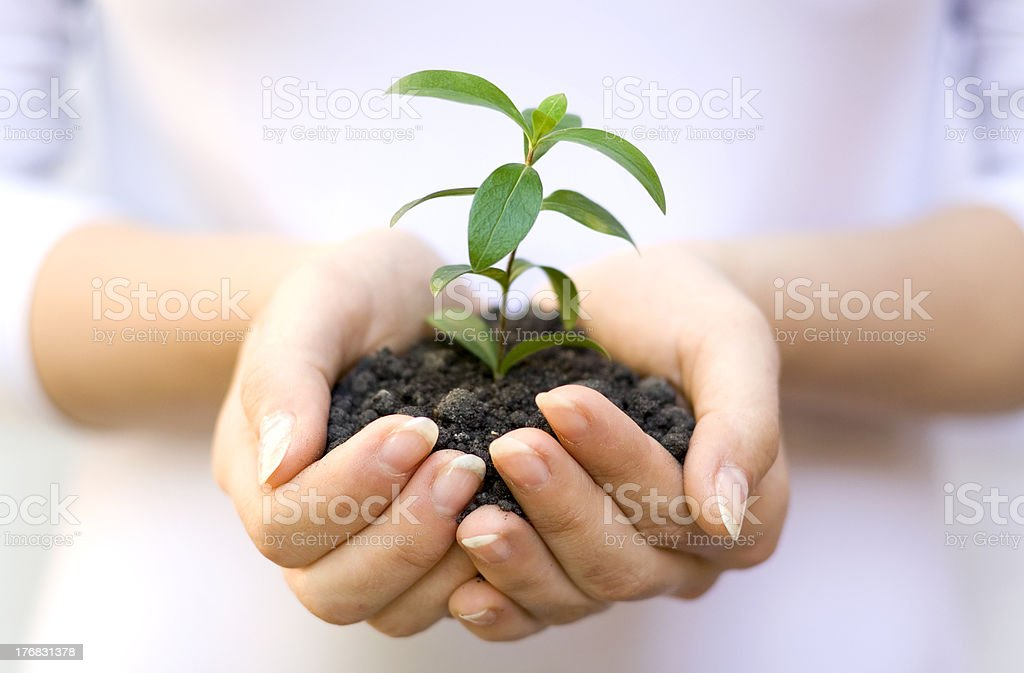 plant in female hands royalty-free stock photo