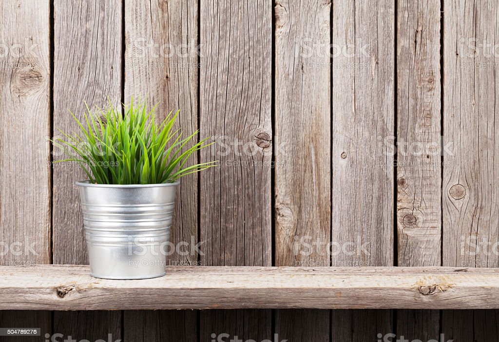 Plant in flowerpot on shelf stock photo