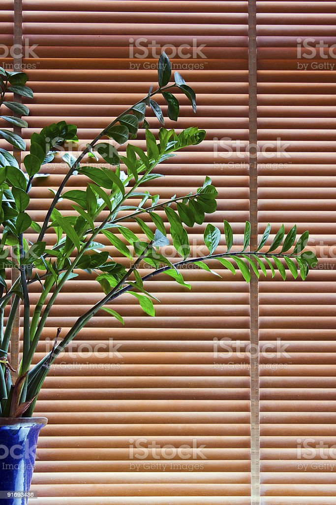 Plant in front of blinds royalty-free stock photo