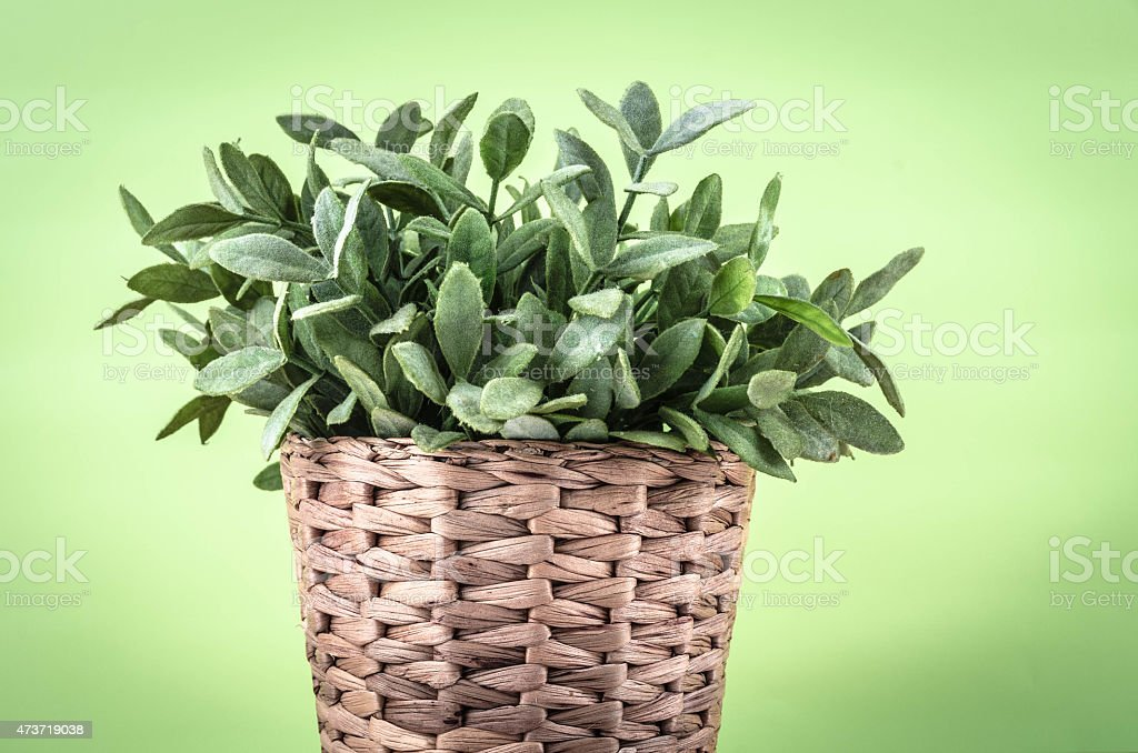 Plant in front of vintage green wallpaper stock photo