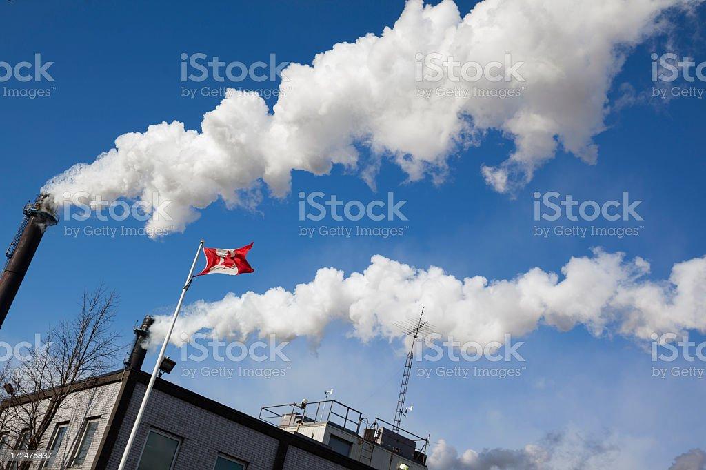 Plant in Hamilton, Canada royalty-free stock photo