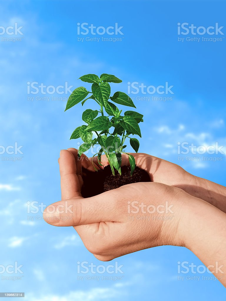 Plant in hand royalty-free stock photo
