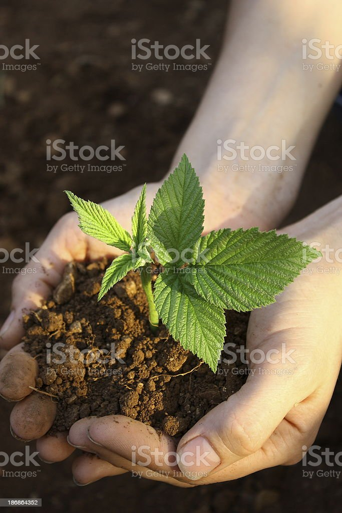Plant in hands royalty-free stock photo