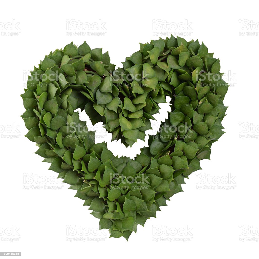 Plant in heart     shape. stock photo